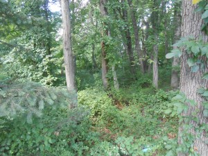 reppert woods 1