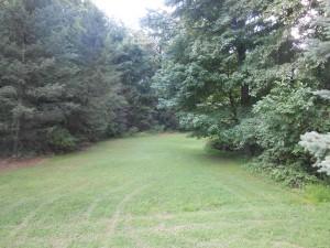 reppert woods 2