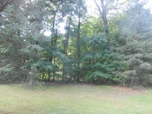 reppert woods 3
